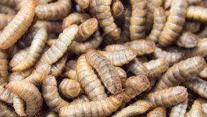 Noi Millennial siamo davvero una generazione di larve debosciate?
